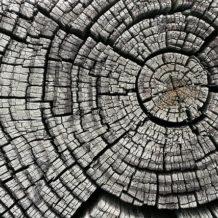 Muster erkennen, die Wachstum nachhaltig hemmen